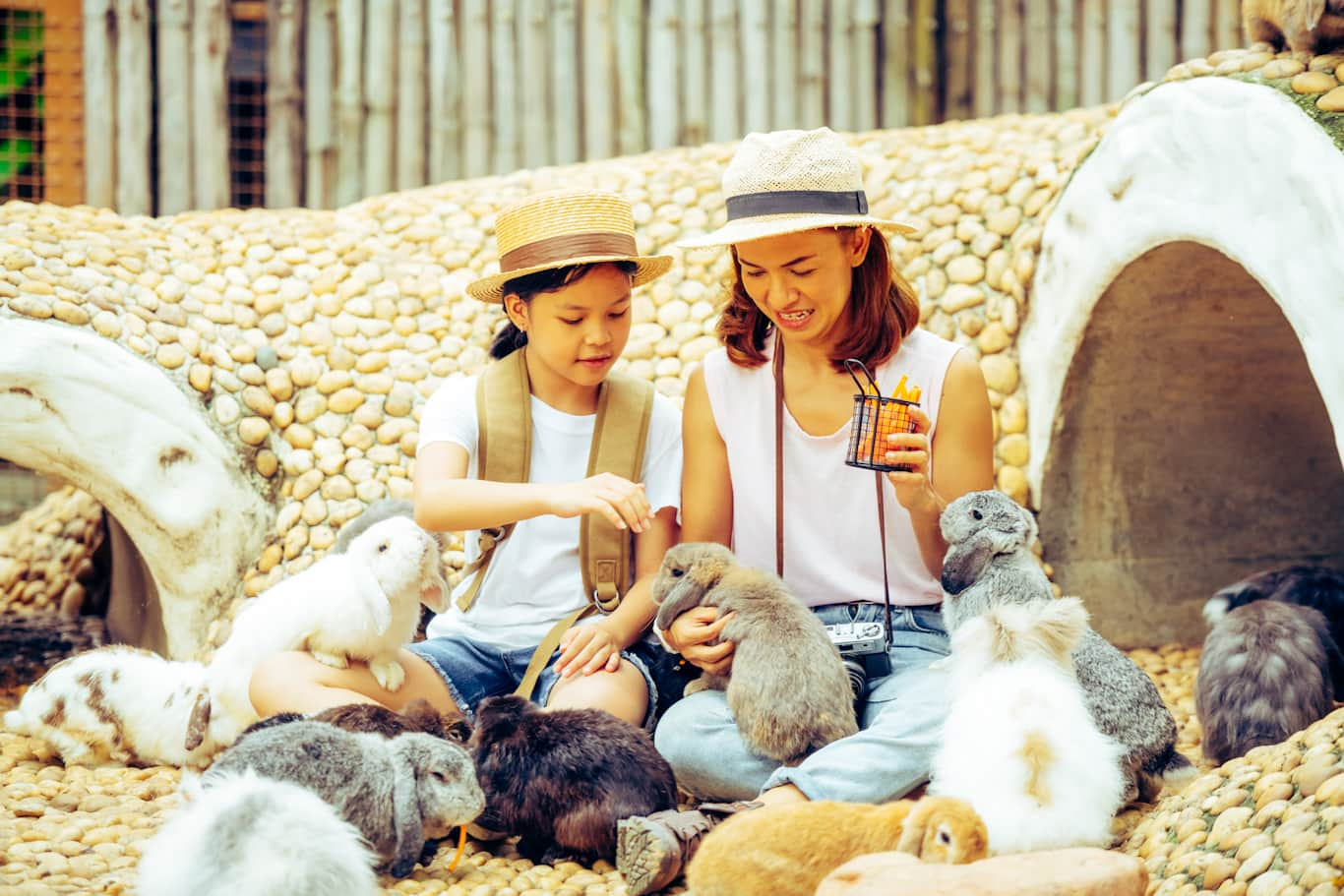 TOP RABBIT BREEDS – Scarletts Rat Essentials
