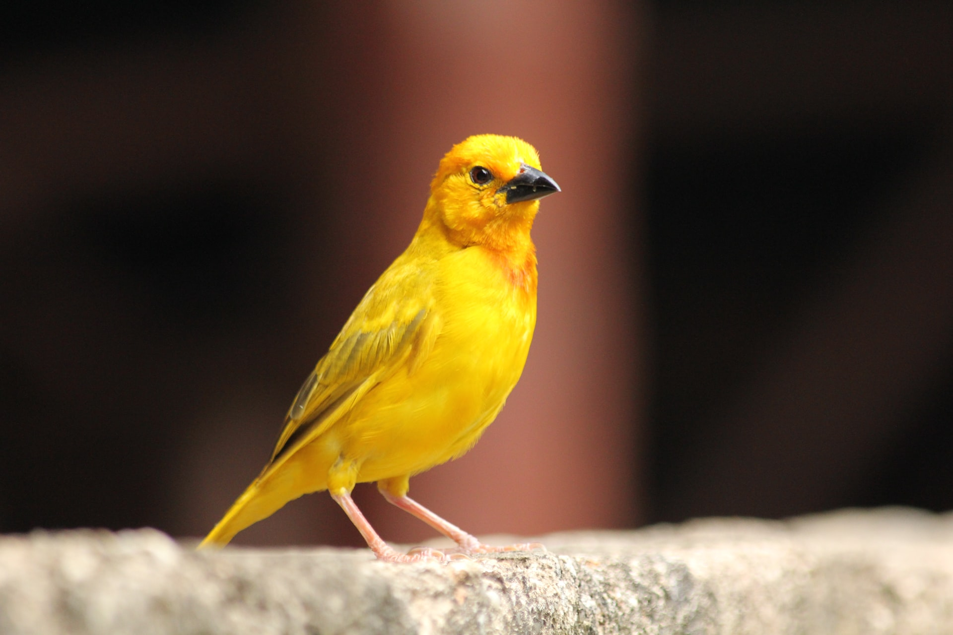 A SICK CANARY SYMPTOMS AND HEALTHCARE